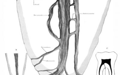 Tooth Anatomy Series Part 1: What You May Not Remember from Dental School